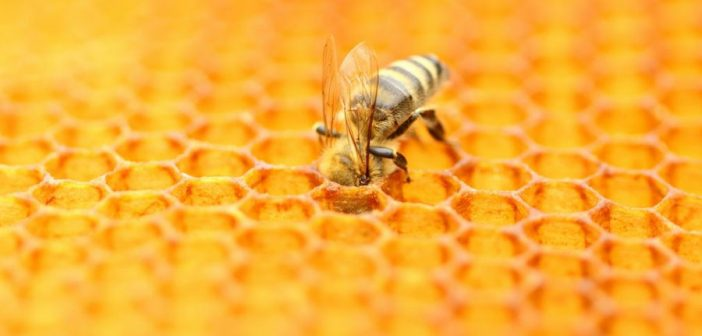 Why Ethical Honey Brands Need to Start Making a Noise